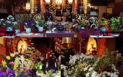花いっぱいのご本堂でヨーガ
